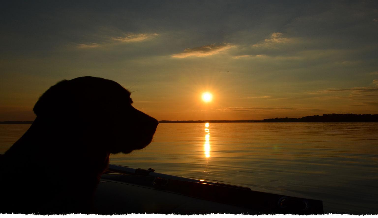 Auch Kira genießt den Sonnenuntergang