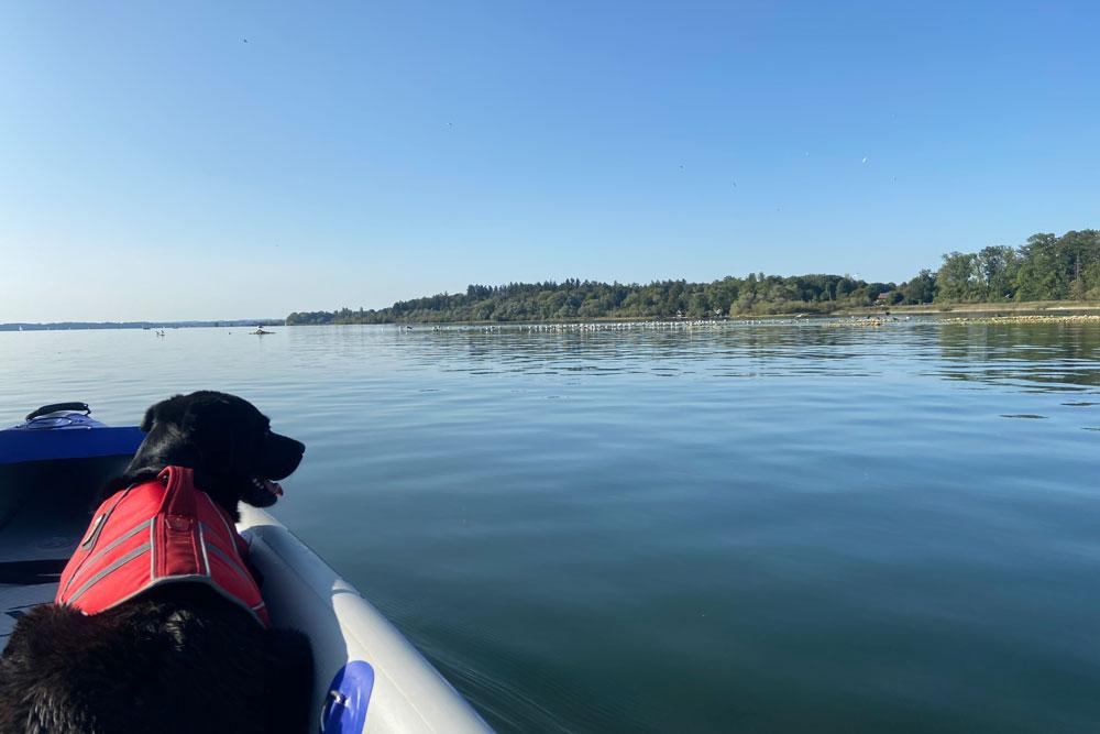Kira gefällts am Wasser