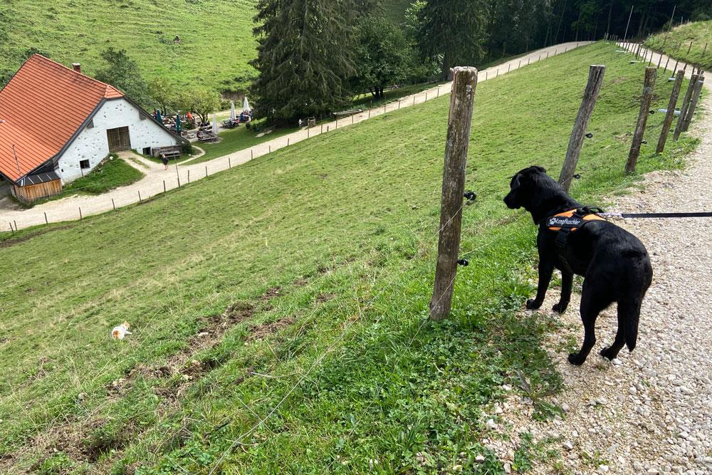 hund6-weinfurterweb.jpg